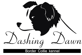 DASHING DAWN BORDER COLLIE KENNEL