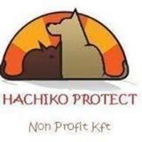 Hachiko Protect Nonprofit Kft, Mecsér
